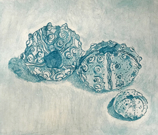 Urchins in Blue, 2018 Etching, 11x15