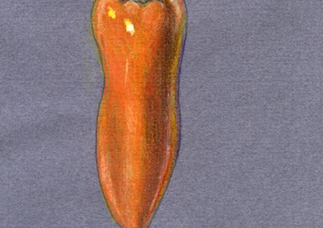 Orange Pepper, 2017, Colored Pencils, 5x7