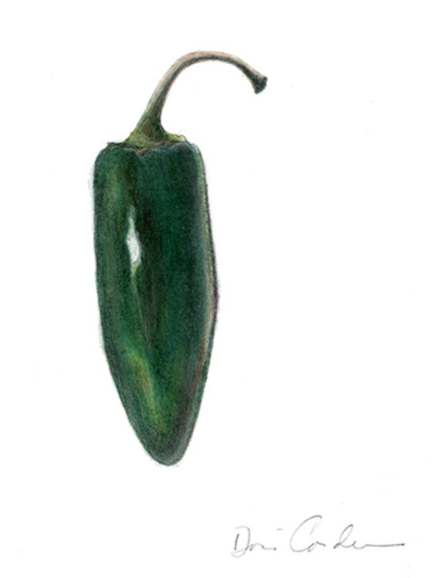 Jalapeño Pepper, 2017, Colored Pencils, 5x7