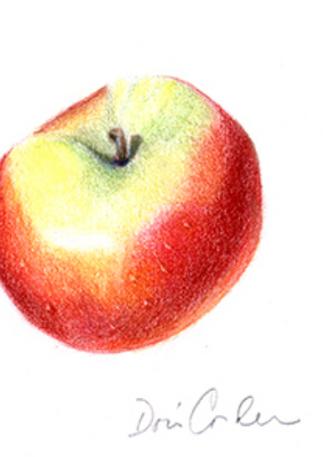 Apple, 2017, Colored Pencils, 5x7