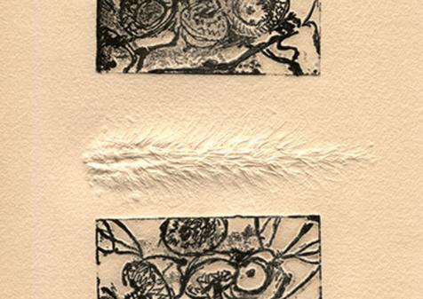 Acorns, 2019, Solar print, 5x10