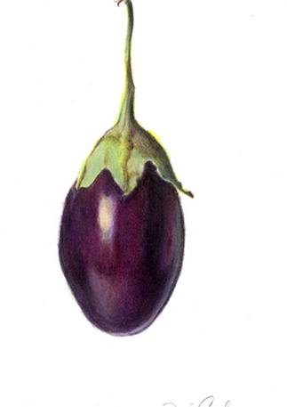 Eggplant, 2017, Colored Pencils, 5x7
