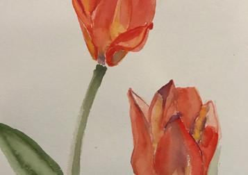 Tulips, 2017, Watercolor