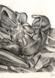 Still Life of Vegetables, 2012, Graphite Pencil, 10x12