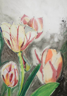 Blooming Tulips, 2019, Colored Pencils and Wash on Vellum, 9x12
