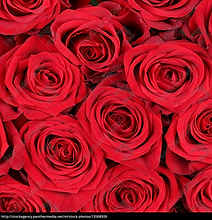 _background-roses-for-valentine-s-day-bi