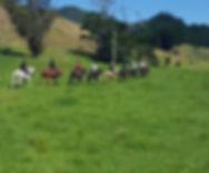 Horse Treks - Whitestar.jpg