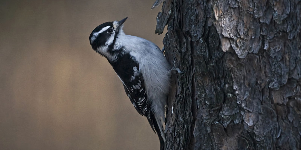 Birding in the Beaver Valley
