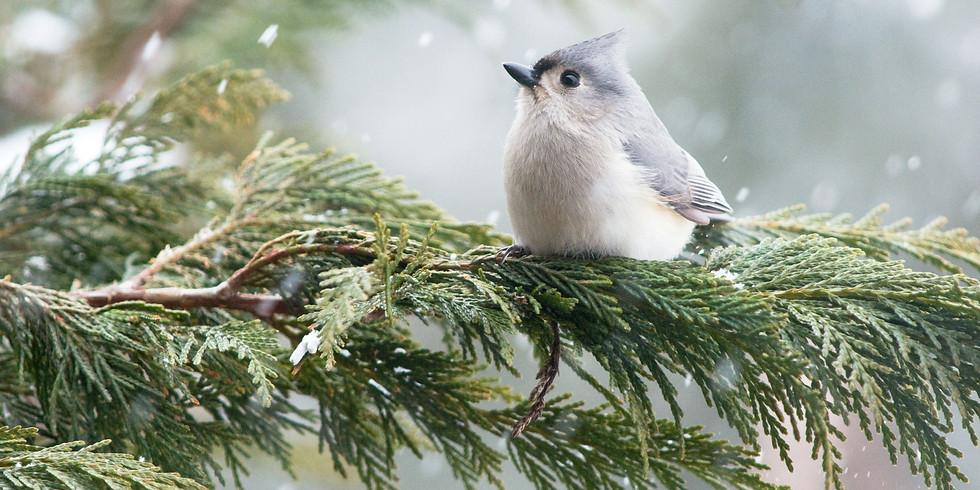 Annual Christmas Bird Counts (1)