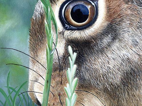 'Hare eye' Print