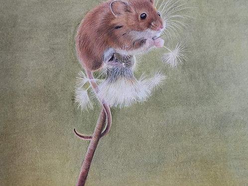 'Harvest Mouse' print