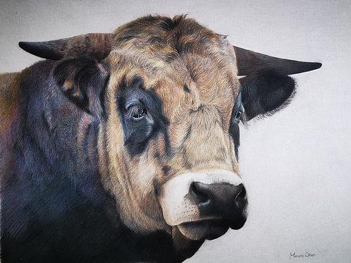 'Guinness' the bull Print