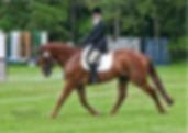 Irish Sport Horse Dressage Utaugh_edited