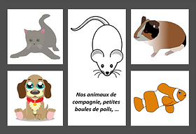 1ERE DE COUV ANIMAUX DOMESTIQUES.png