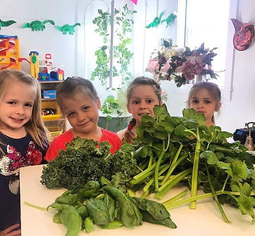 Fresh celery, kale, and spinach from our