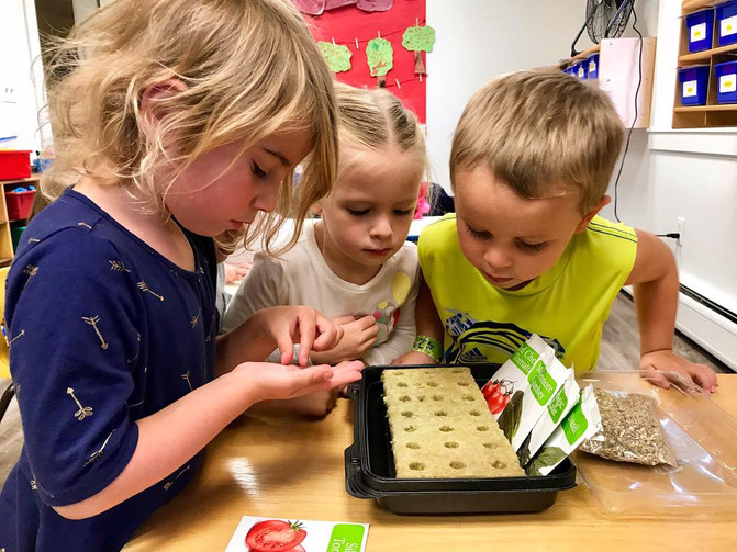 Planting Seeds for our Tower Garden