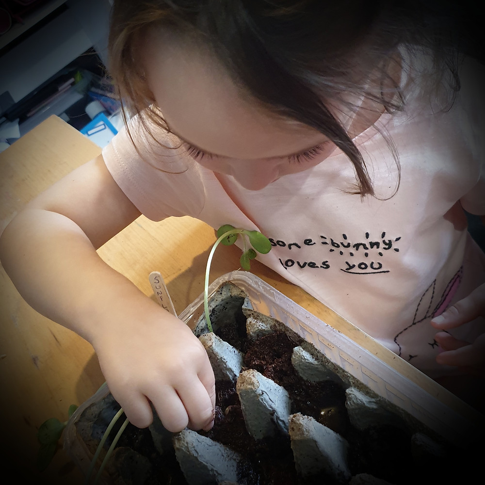 Little girl planting seeds in an empty egg box
