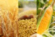 Arabian-Commodities_Banners_Agri-400x267