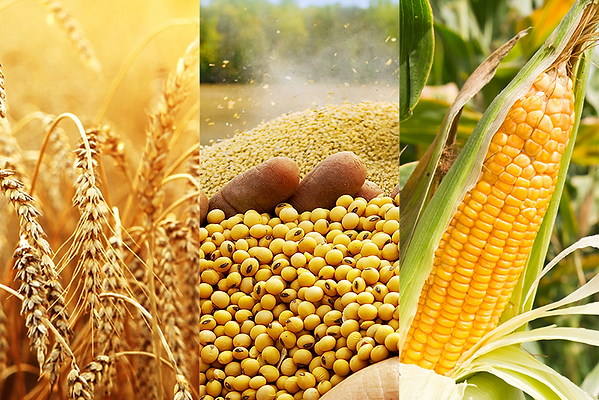 Arabian-Commodities_Banners_Agri-400x267