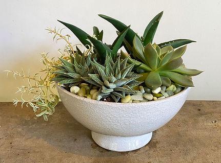 SucculentCompote.jpg
