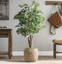 Floor+Ficus+Tree+in+Pot.jpg
