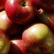 Macintosh Apple 13 Oz
