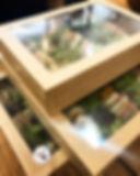 box sandwiches.jpg