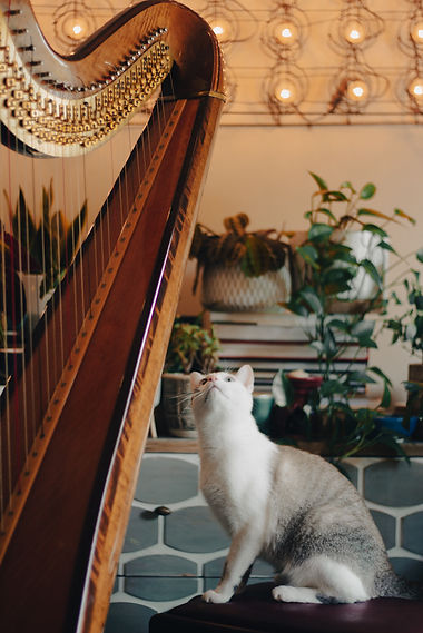 Photo of cat sitting at the harp
