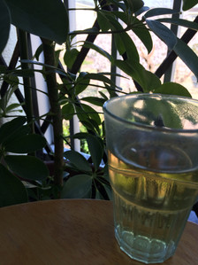 yuka_mil 島本町 発酵番茶