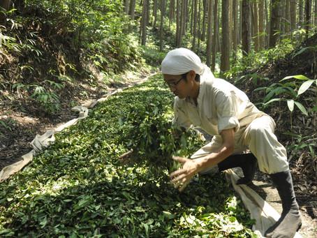 発酵番茶 / お百姓さんの健やかな茶