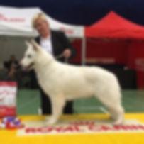 Lisel, White Rewyr, Hvit Gjetehund