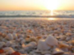 seashellsborder.jpg