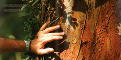 Livro A Árvore da Música