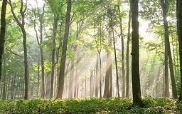 BlissWoodsForestPreserve_edited.jpg