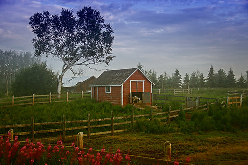 """On the Farm 24x36"""" Float mounted Metal print"""