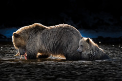 Sow and Cub backlit (1 of 1)
