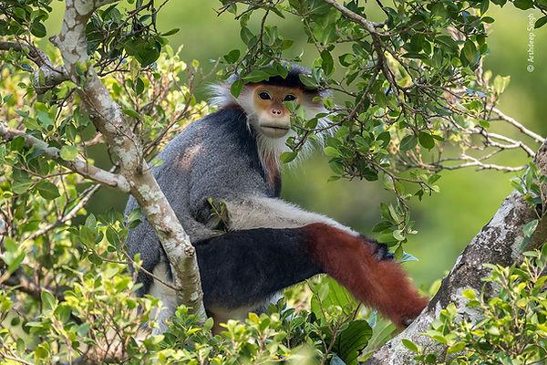 ©_Arshdeep_Singh,_Wildlife_Photographer