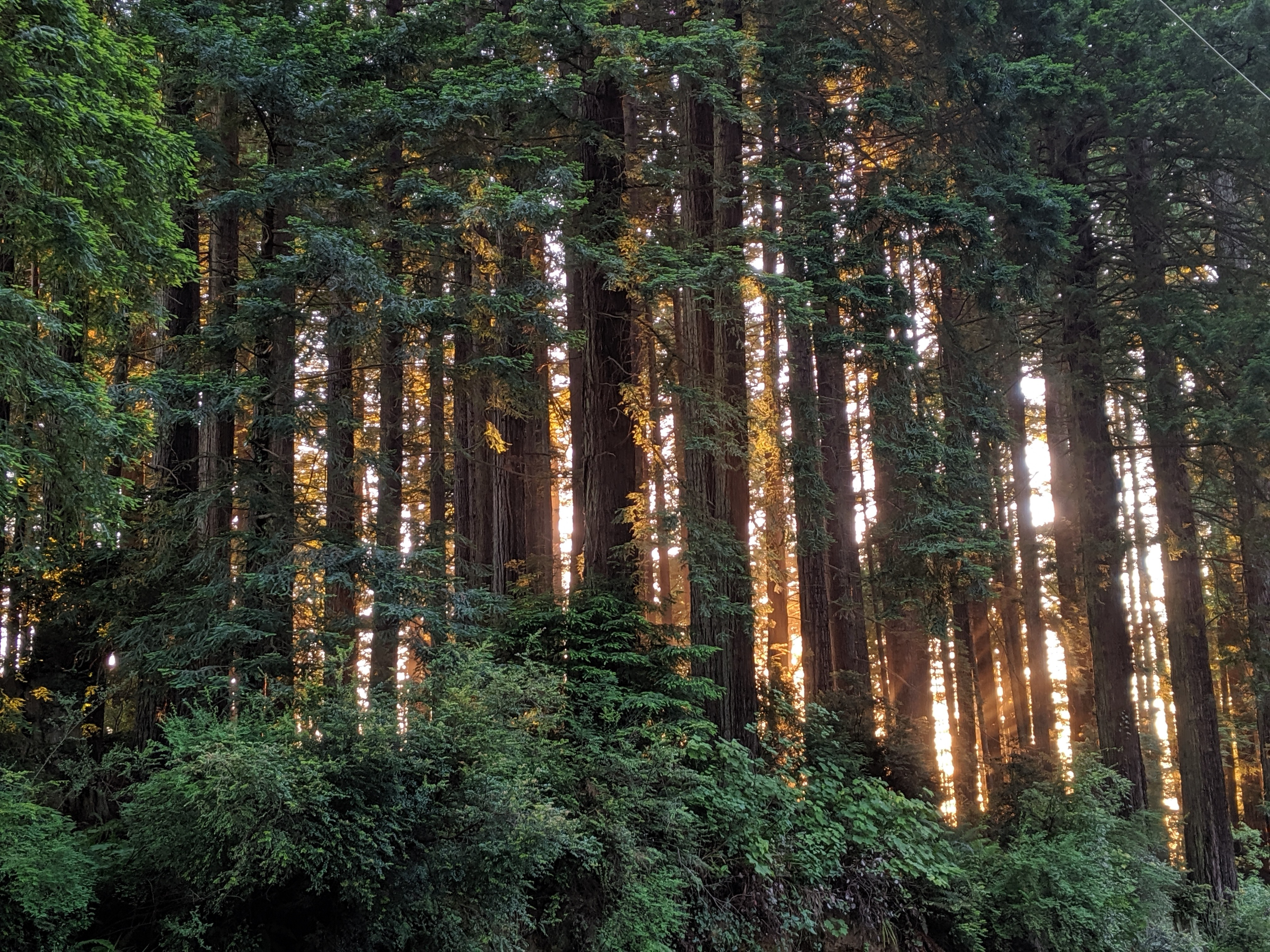 redwoods sunset.jpg