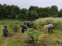 gardeninterns.jpg