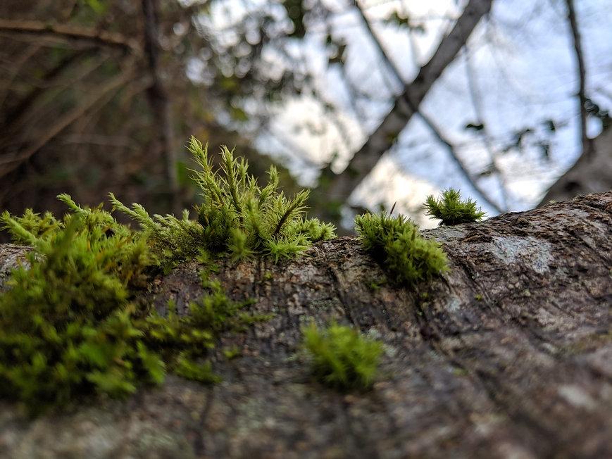 mossforest.jpg