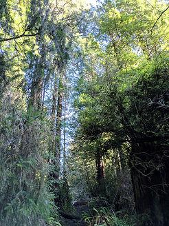 redwoodsbarnum.jpg