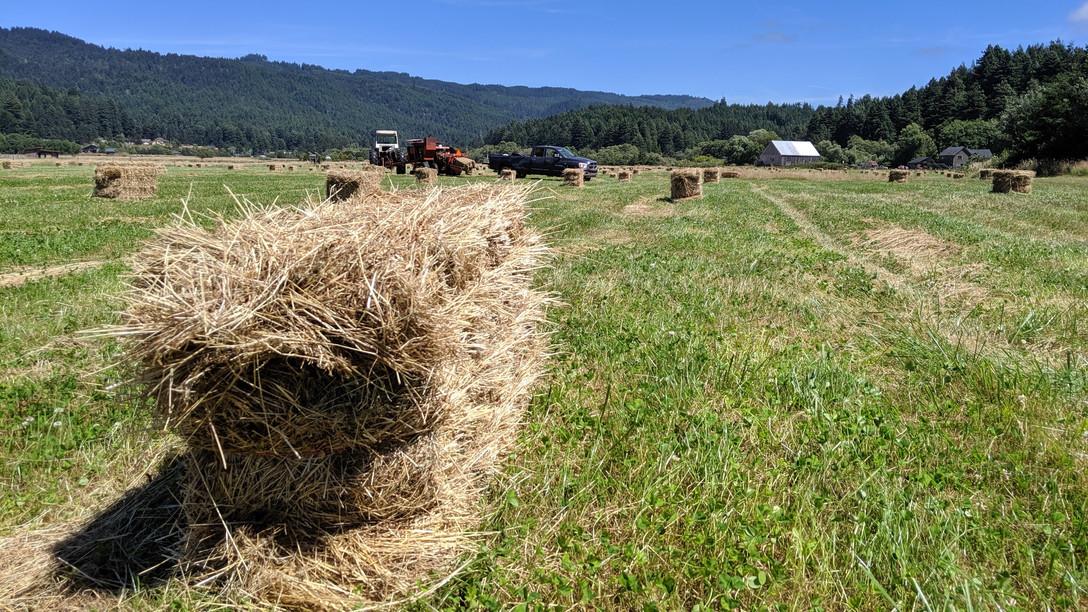 haying.jpg