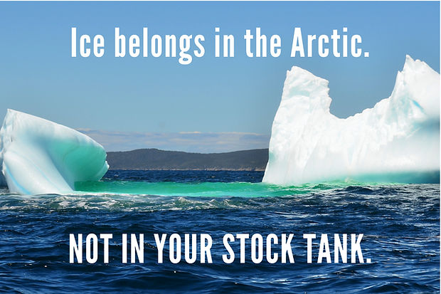 Arctic_clean.jpg