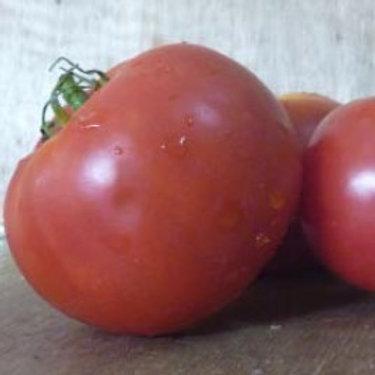 Tomato F1 SYMBAL