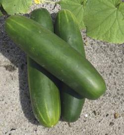 Cucumber F1 Kenzo
