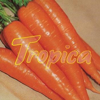 Carrot Amazonia