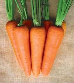 Carrot_Louxor_TS