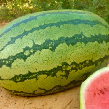 WatermelonF1 LOGONE+