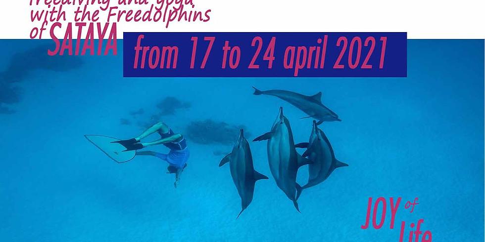 Voyage Dauphin, Apnée et Yoga dans la mer Rouge - 17 au 24 avril