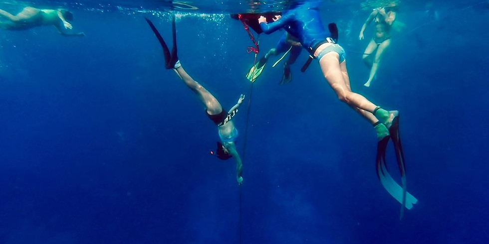 Et le dauphin est en toi ! - 2 au 7 juin